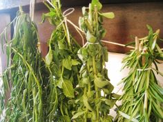 Creating a Kitchen Pharmacy: Traditional Methods of Preserving Homegrown Herbs Herb Farm, Herb Garden, Home And Garden, Herbal Remedies, Home Remedies, Natural Remedies, Organic Gardening, Gardening Tips, Spices And Herbs