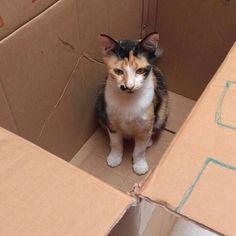 """1,054 curtidas, 2 comentários - Catland - Adoção de Gatinhos (@catlandrescue) no Instagram: """"Mamãe Joana já tem sua caixa própria ❤ Será que tem um espacinho na sua casa pra ela e a caixinha?…"""""""