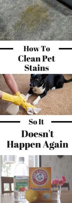 If You Clean Dog Stains Wrong, It Will Happen Again. Dog Expert Shares The Best Way To Do It How to Clean Dog Urine from Carpet and Keep Your Dog from Peeing on the Carpet Again Deep Cleaning Tips, House Cleaning Tips, Spring Cleaning, Cleaning Hacks, Diy Pet, Urine Stains, Remove Stains, Homemade Toilet Cleaner, Dog Urine