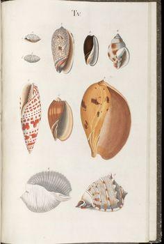 Introduction à une histoire systématique des animaux à coquille — Afficheur — Bibliothèque numérique mondiale