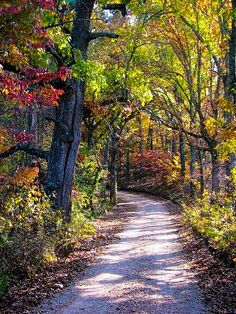 Path in autumn (near Blue Spring, Shannon City, Missouri) by Methven Swanson