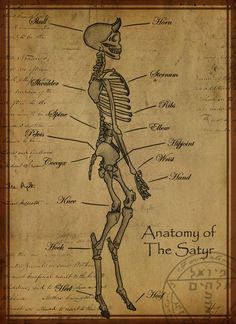 Satiro Esqueleto