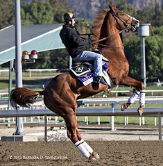 24 Best Shackleford Images Horse Racing Horses