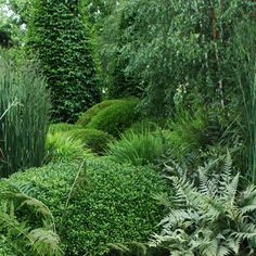 136 meilleures images du tableau Jardin d\'ombre   Shade Garden ...