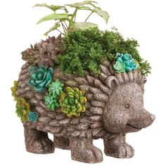 Succulent Garden Hedgehog Planter ($45) ❤ liked on Polyvore featuring home, outdoors, outdoor decor, garden decor, garden statuary, garden patio decor and succulent planter