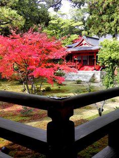 大覚寺 Japanese Culture, Japanese Art, Places Around The World, Around The Worlds, Forest Garden, Kyoto Japan, Temples, Autumn Leaves, Vacations