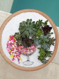 Very colorful…eye-catching - All About Gardens Succulents In Containers, Cacti And Succulents, Container Plants, Planting Succulents, Planting Flowers, Fairy Garden Plants, Garden Terrarium, Succulent Terrarium, Flower Planters