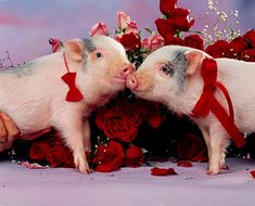 I am oinkers for you Baby Piglets, Cute Piglets, This Little Piggy, Little Pigs, Puppy Pictures, Animal Pictures, Pig Pics, Funny Animals, Cute Animals