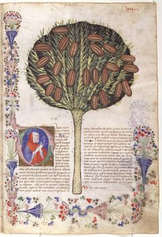 """""""Historia Plantarum"""", 1395/1400, Milan, Italie, text: Pedanius Dioscoride of Anazarbos (40-90 AD), images: Giovannino et Salomone de' Grassi (ca. 1350–1400)"""
