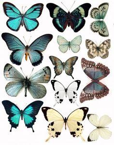 карточки для скрапа бабочки для распечаток: 12 тыс изображений найдено в Яндекс.Картинках