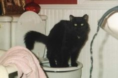 Toilet Train Your Cat. (theartofdoingstuff.com ) Entire website is humorous and addicting.