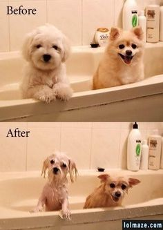 The best before/after pic ever.