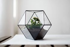 glass terrarium cuboctahedron by boxwoodtree on Etsy