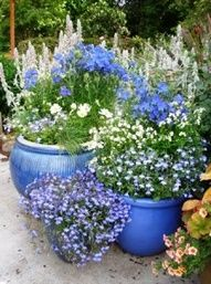 blue pots/blue flowers!