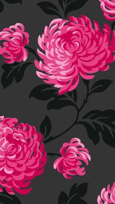 Flowers black hot pink fuschia