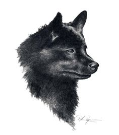 SCHIPPERKE Dog Pencil Drawing ART Print Signed by by k9artgallery