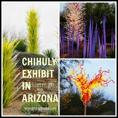 We took a warm respite and traveled to Arizona and visited the Chihuly Exhibit while there. The glass designs were lit at night, but they were just as beautiful during the day against the textures and beauty of the desert plantings.