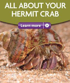 All about your hermit crab...