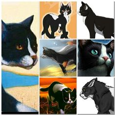Tallstar special thanks to Dovewing for making all of these for me :)
