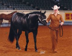 AQHA Halter Horses | Buck Creek Ranch - home of CKADE - World Champion / World Champion ...