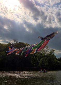 善福寺公園の鯉のぼり。