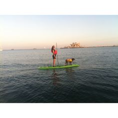 A lot of people are starting to take their dogs on SUP boards. Start slow, and definitely get your dog a PFD in case things don't go as planned.