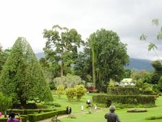 Botanical Gardens, Golf Courses, Dolores Park, Travel, Viajes, Traveling, Trips, Tourism