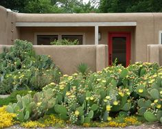 Prickly Pear Cactus garden (most fleshy succulents are edible) | SW Native Plants