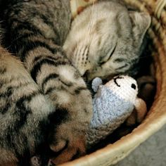 Looks like Logan kitty. Only he would be cuddling with his toys: tinsel ball & blue tail!
