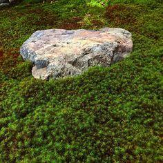 昨晩の雨のおかげで苔も嬉しそうです。 #勝林寺#京都 #禅寺#苔 kyoto_shourinji 毘沙門堂 勝林寺