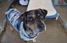 #DonaUnSuerter: Un acto de amor para ayudar un albergue animal.