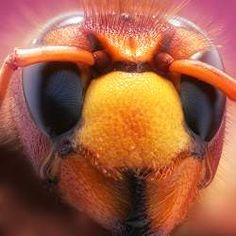 Amazing insect photography by Leon Baas of the Netherlands