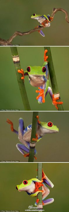 Love those Tree Frogs!