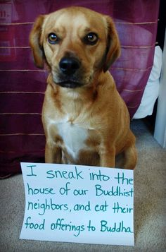 """I sneak into the house of our Buddhist neighbors, and eat their food offerings to Buddha"" - Dog Shaming - Imgur"