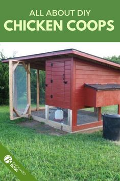 This article explains the different types of coops, what to look for in the interior, and how to DIY yourself a coop from pallets or sheds. This is everything you could possibly want to know, including all the amazing benefits from raising your own hens.