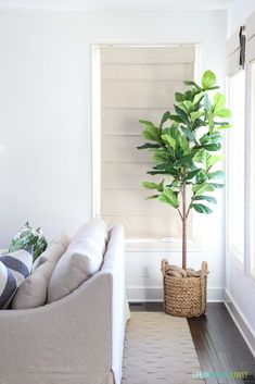 Bright & white coastal inspired living space with a fiddle leaf fig.  Pottery Barn York Sofa with coastal throw pillows and greenery. #homedecor #homedecorideas #homedesign