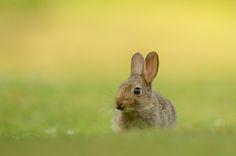 Rabbit kit | by Ben Andrew on Flickr