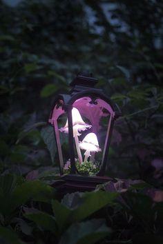 Glowing Mushrooms, Mushroom Lights, Deco Nature, Larp, Night Light, Stuffed Mushrooms, Art Nouveau, Pure Products, Outdoor Decor