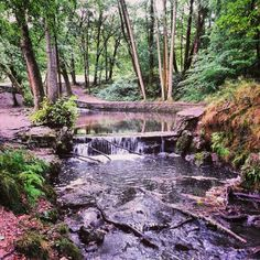 Canop ponds  Forest of dean, England