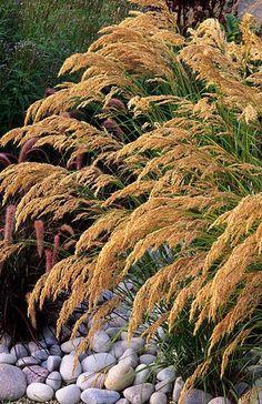 Stipa calamagrostis, no link Landscaping Plants, Garden Plants, Types Of Grass, Stipa, Garden Maintenance, Drought Tolerant Plants, Garden Pictures, Ornamental Grasses, Back Gardens