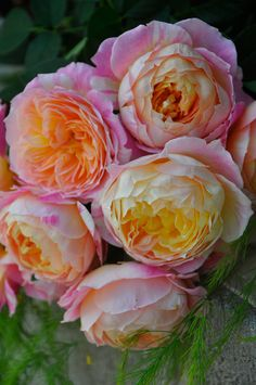 Life is beautiful. Beautiful Rose Flowers, Flowers Nature, Amazing Flowers, Beautiful Gardens, Coming Up Roses, David Austin Roses, Flower Aesthetic, Flower Images, Growing Flowers