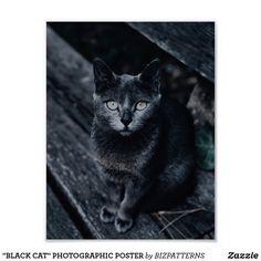 """BLACK CAT"" PHOTOGRAPHIC POSTER Stationery Store, Corner Designs, Custom Posters, Beautiful Creatures, Custom Framing, Nature Photography, Vibrant, Black Cats, Mosaics"