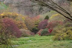 Explore the gardens at Wildside Nursery and The Garden House in Devon through our diarist's photographs. Dream Garden, Home And Garden, Magnolia Stellata, Alpine Garden, Woodland Flowers, Acer Palmatum, Clematis, Flower Beds, Hedges