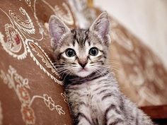 I want this kitty