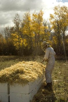 """Heaping straw atop hives for over-wintering. #beekeeping #beekeepingideas"""