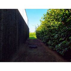 【syota330】さんのInstagramをピンしています。 《ゆらゆらゆらゆら僕の心 風に吹かれて ゆらゆらゆらゆら君の心 離れ離れ  ないものねだり/KANA-BOON  #ファインダー越しの私の世界  #一眼レフ #sky #バイク #ツーリング #記録 #写真好きな人と繋がりたい #trip #sonyalpha #おしゃれ #Kawasaki #森 #photography #自然 #green #forest #カメラマンさんと繋がりたい #japan #路地裏 #motorcycle #park #風景 #selfie #japanese #olympus #blue #flowers #nature #花》