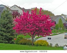 I would put this in the front yard where that ugly sumac tree is