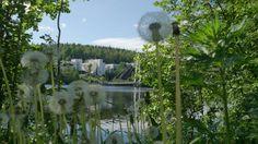 EMBA seminars are organized all over in Finland. This is University of Jyväskylä Campus Finland, University, Mountains, Nature, Travel, Naturaleza, Viajes, Trips, Nature Illustration
