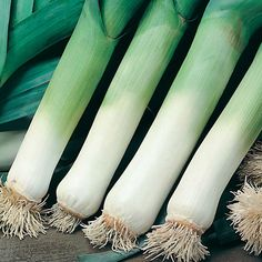 autumn vegetable gardens | Wilko Vegetable Garden Autumn Giant 3 Leek source deleted. New link to blog on planting, harvesting & storing leeks.