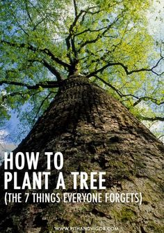 How to plant a tree - the 7 things everyone forgotten Garden & Landscape Home Makeover Project Idea   Pinterest Project Difficulty: Simple MaritimeVintage.com